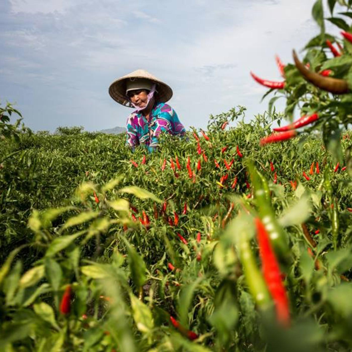 Etienne Bossot, expatrié et photographe au Vietnam