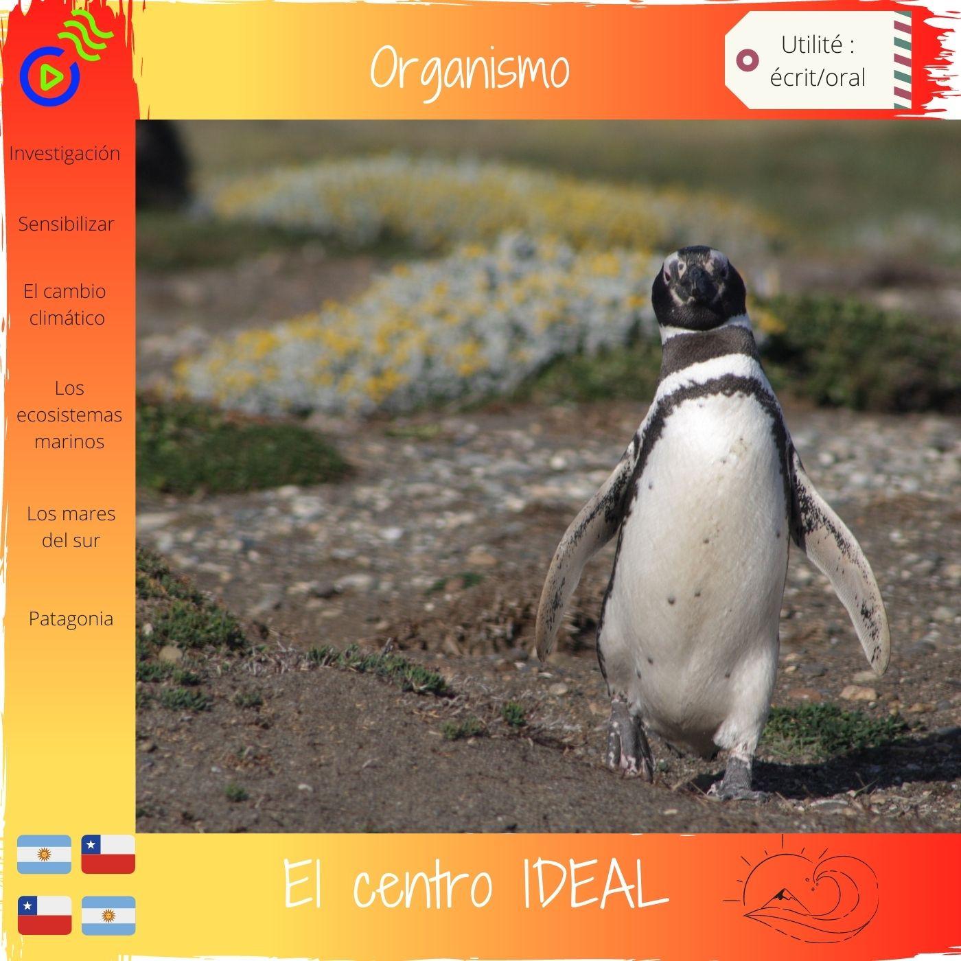 El Centro IDEAL de Patagonia