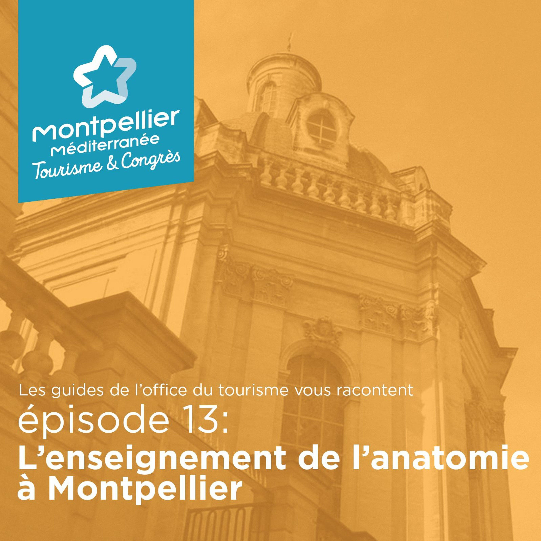 Épisode 13: L'enseignement de l'anatomie à Montpellier
