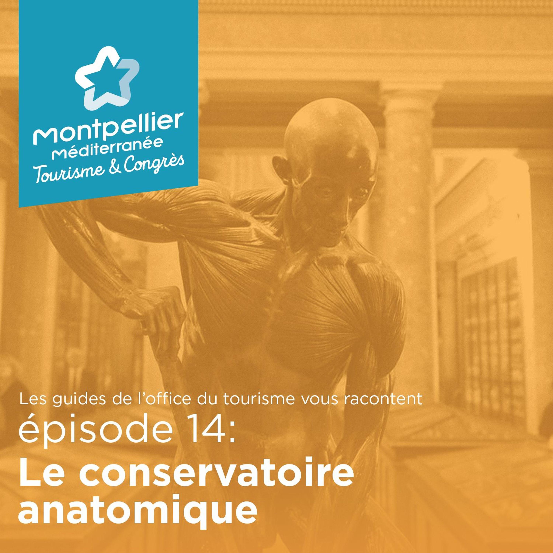 Épisode 14: Le conservatoire anatomique