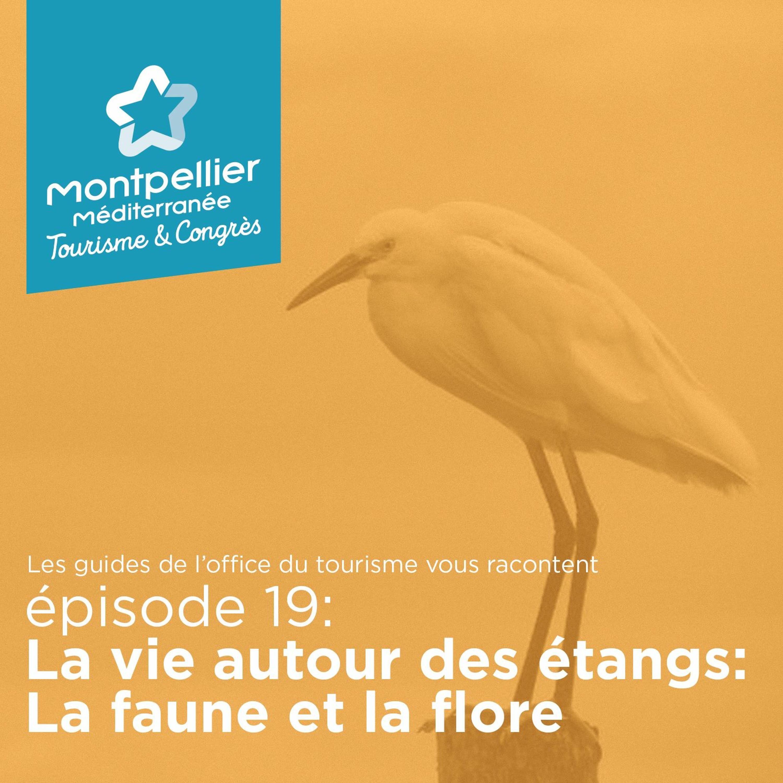Épisode 19: La vie autour des étangs: La faune et la flore