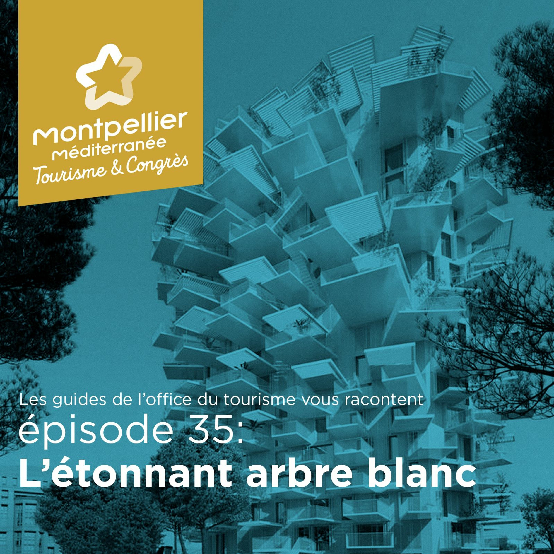 Épisode 35:  L'étonnant arbre blanc