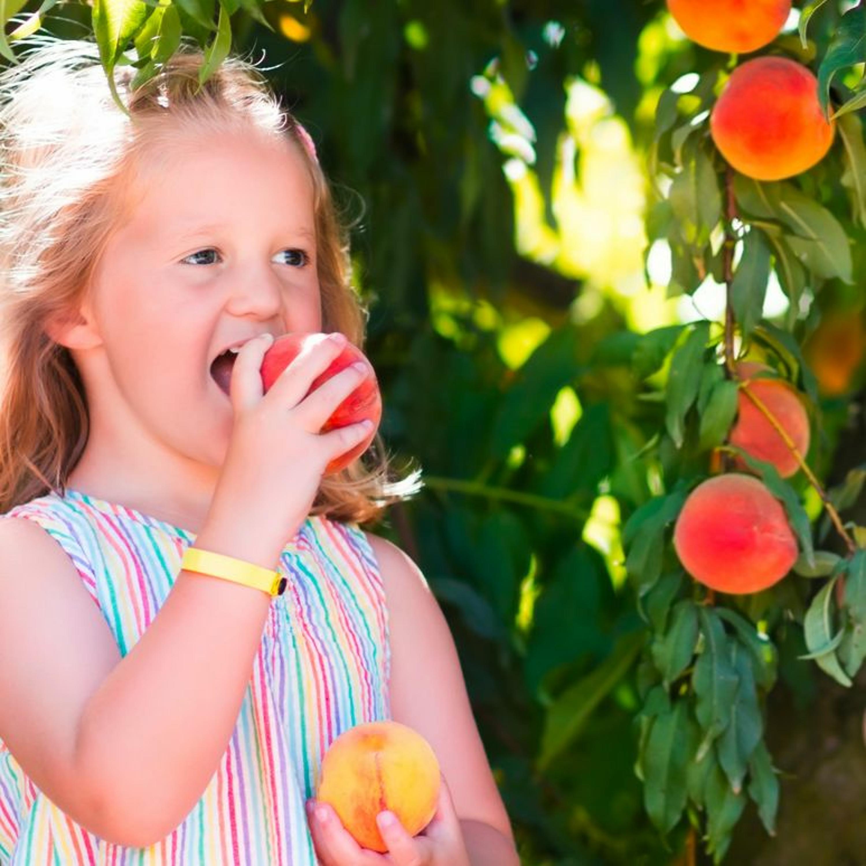 DIS,C'EST QUOI DANS MON ASSIETTE ? - Pêches et nectarines, que du bonheur pour les enfants