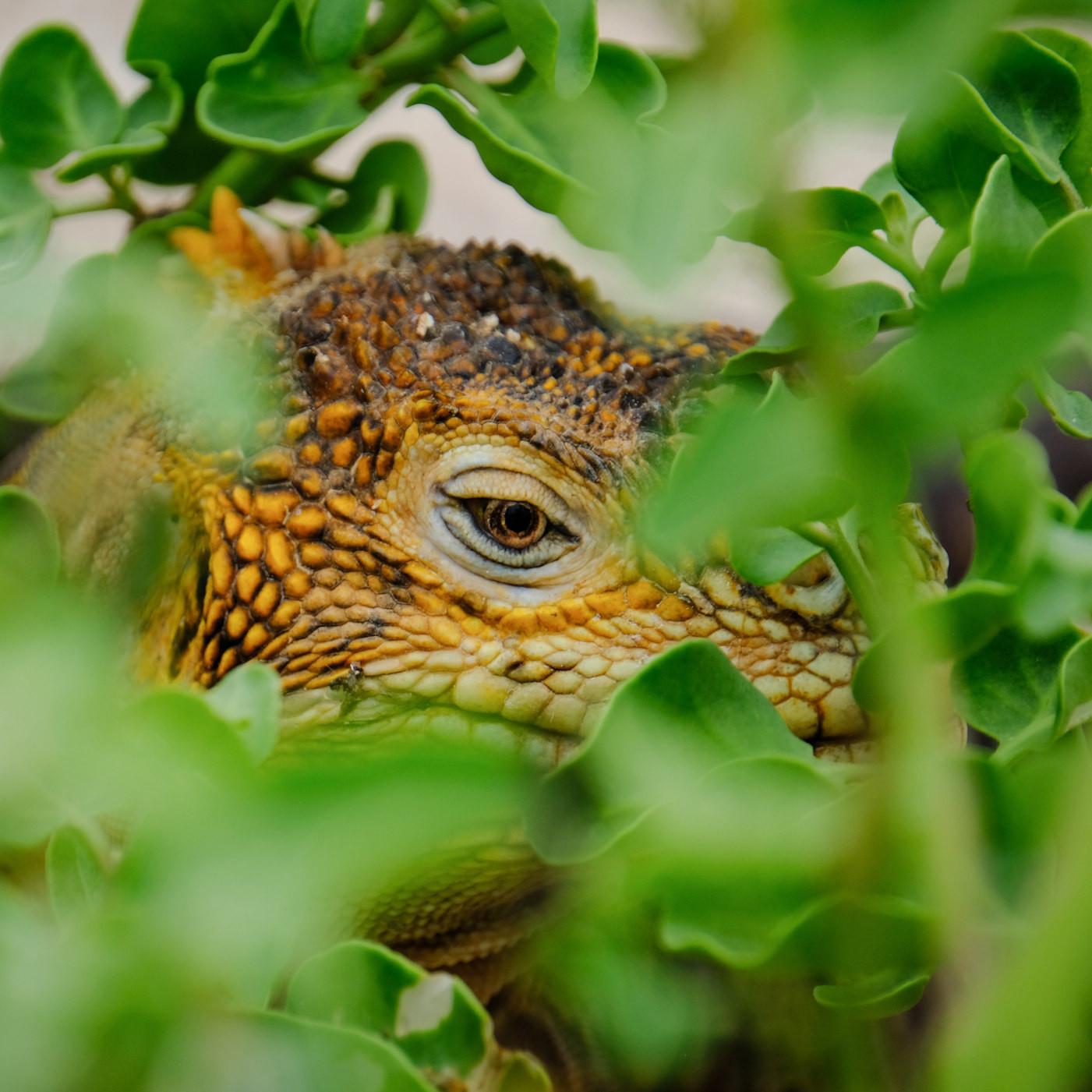J'veux un dragon ! - Olivier Gechter