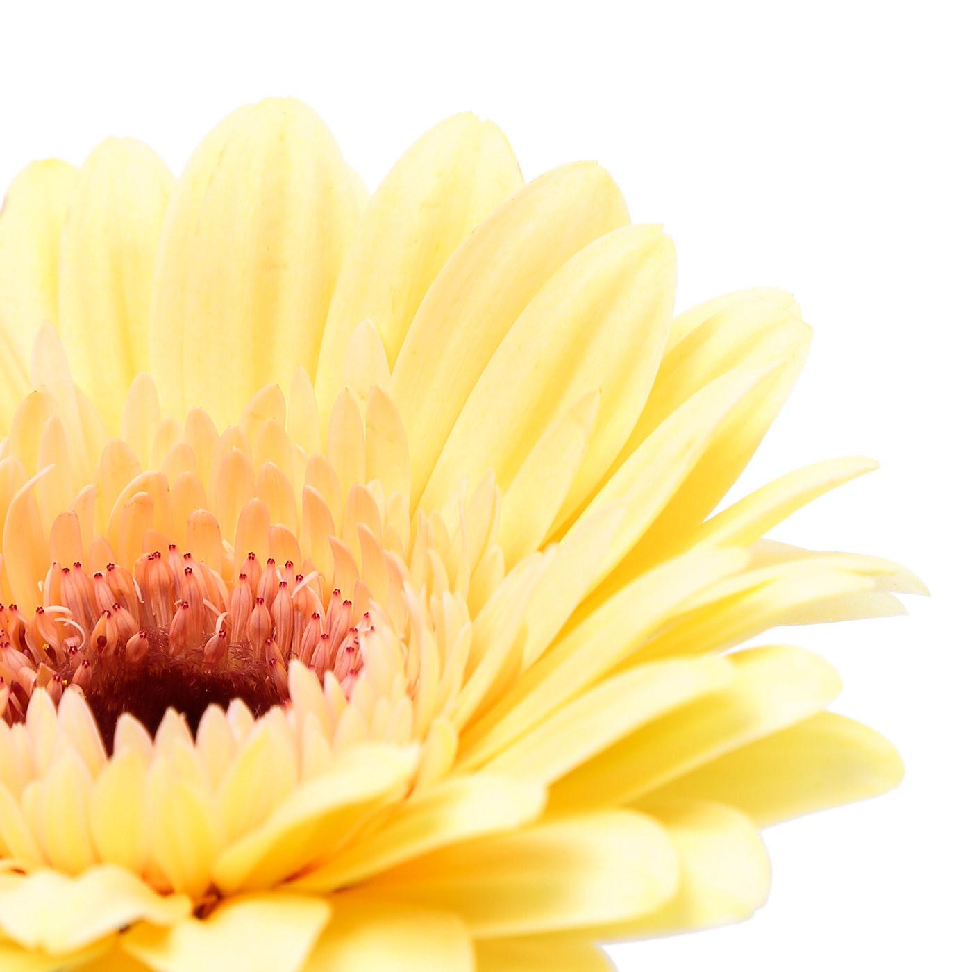 Une petite fleur - Olivier Gechter