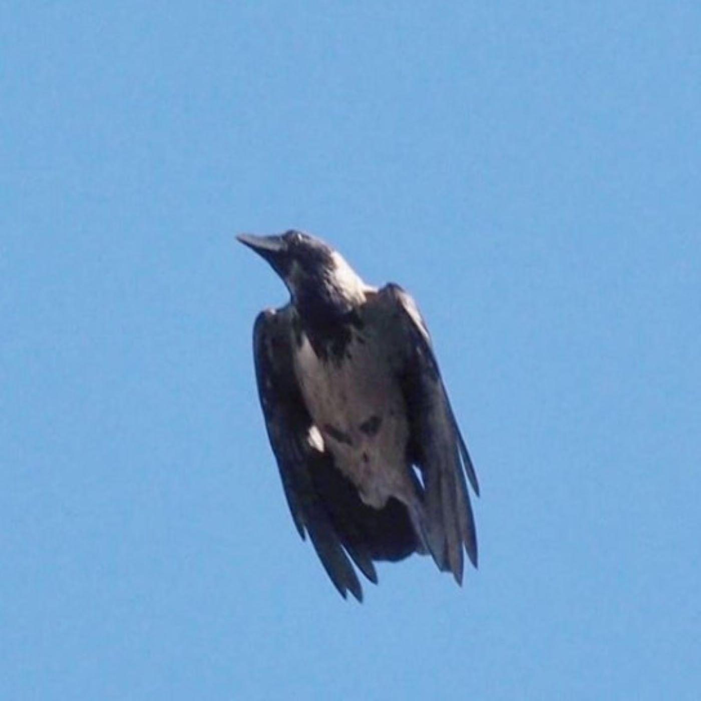 Şehir Kuşçusu 2 - Karantina günlerinde kuşlar