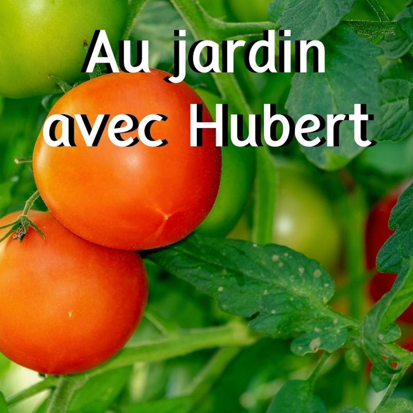 Les Saveurs du Potager : comment bien choisir ses variétés de tomate ?